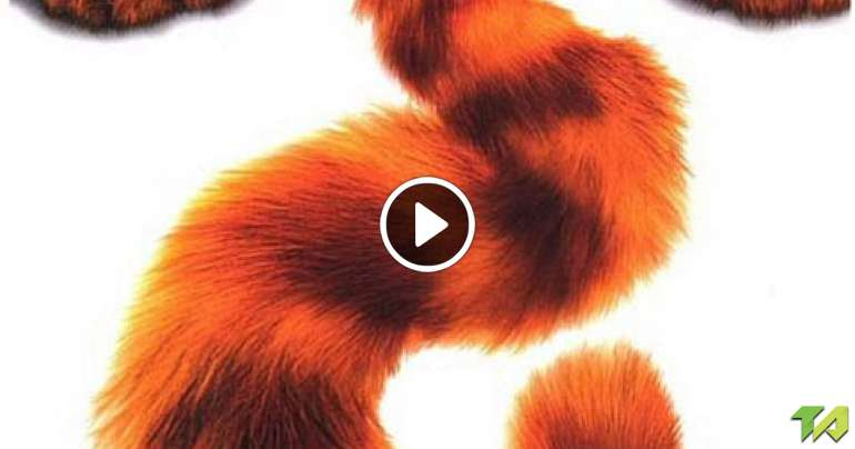 Kung Cast Panda Fu