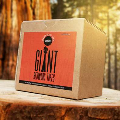 Grow Your Own Giant Redwood Tree