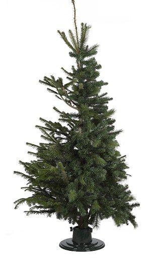 Hybrid Christmas Trees Standing Christmas Tree