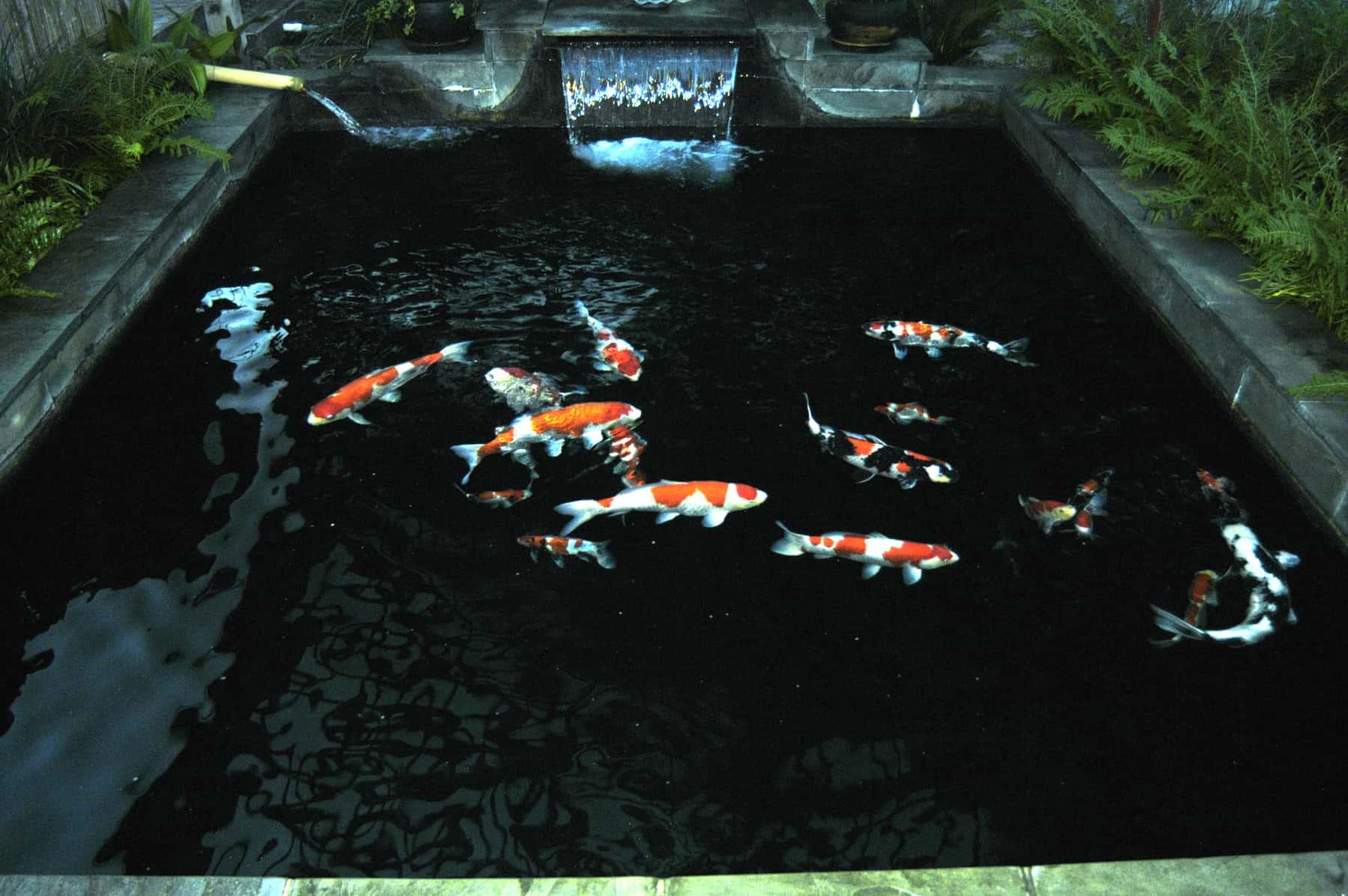 Above Ground Fish Pond Ideas