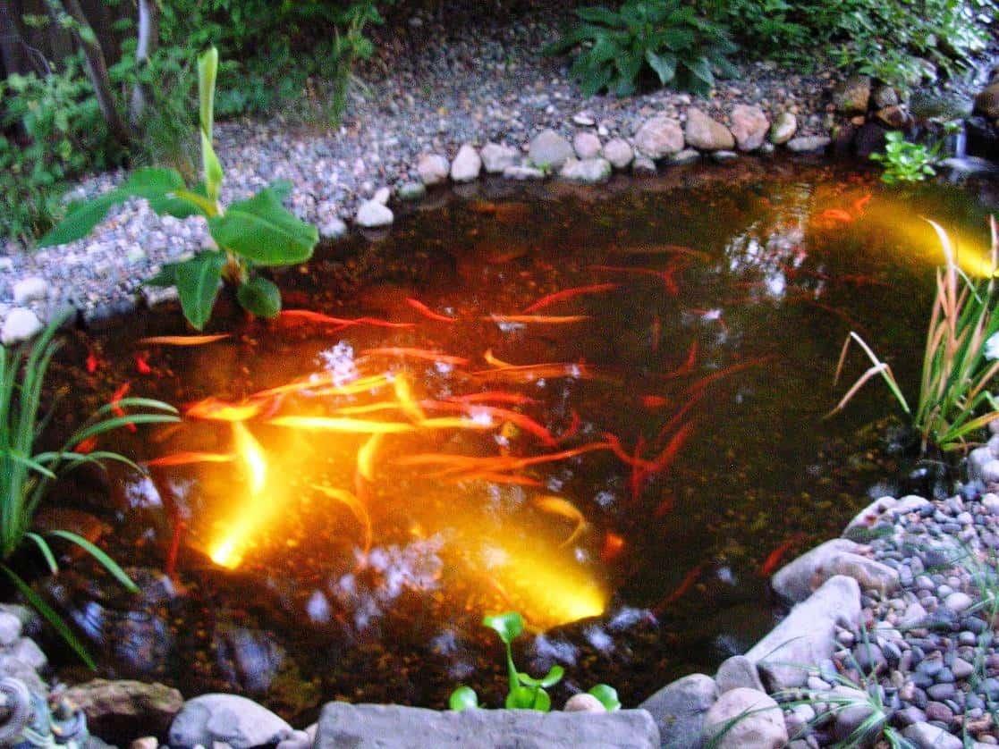 Small Koi Fish Pond