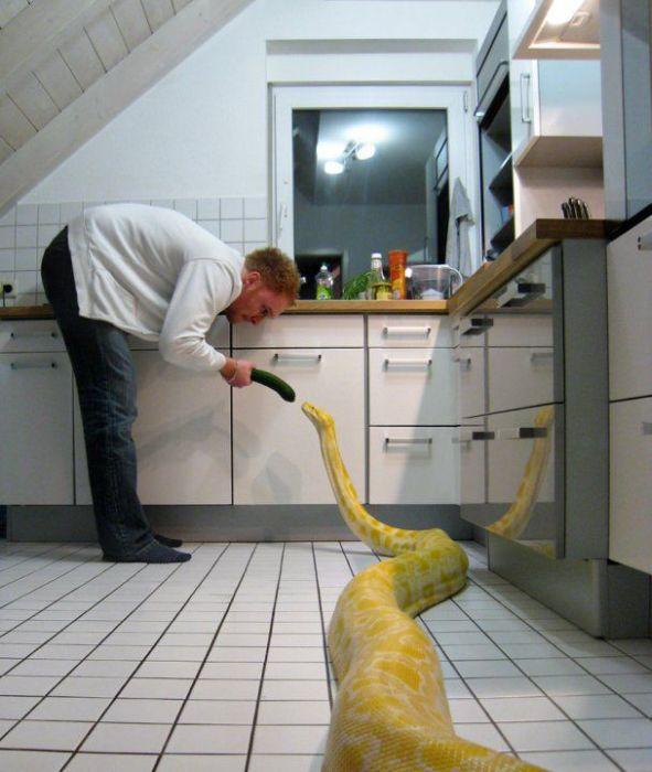 Yılanla Yaşayan Aile(20 Fotograf)