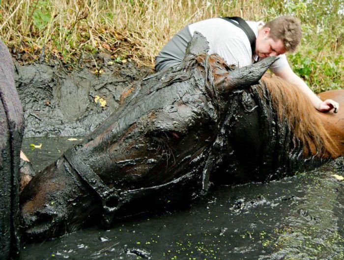 Bataklığa Düşen Atın Kurtuluşu (7 Fotograf)