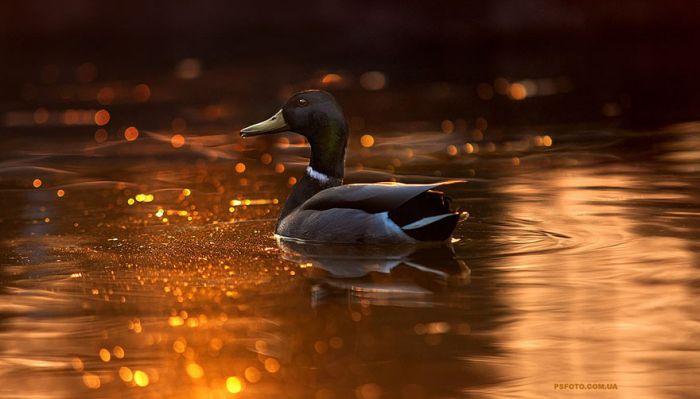 Hayvan Resimleri -Sergey Polyushko (30 Fotograf)