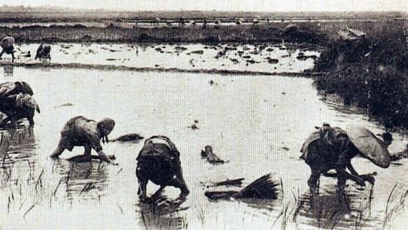 Hạt gạo Camargue nổi tiếng Pháp và lính thợ Việt Nam 70 năm - Ảnh 3.