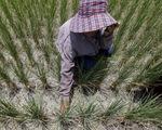 Thái Lan ra tay chống thiếu nước