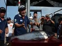 """Mang cá tra ra """"cúng"""" trạm BOT Biên Hòa"""