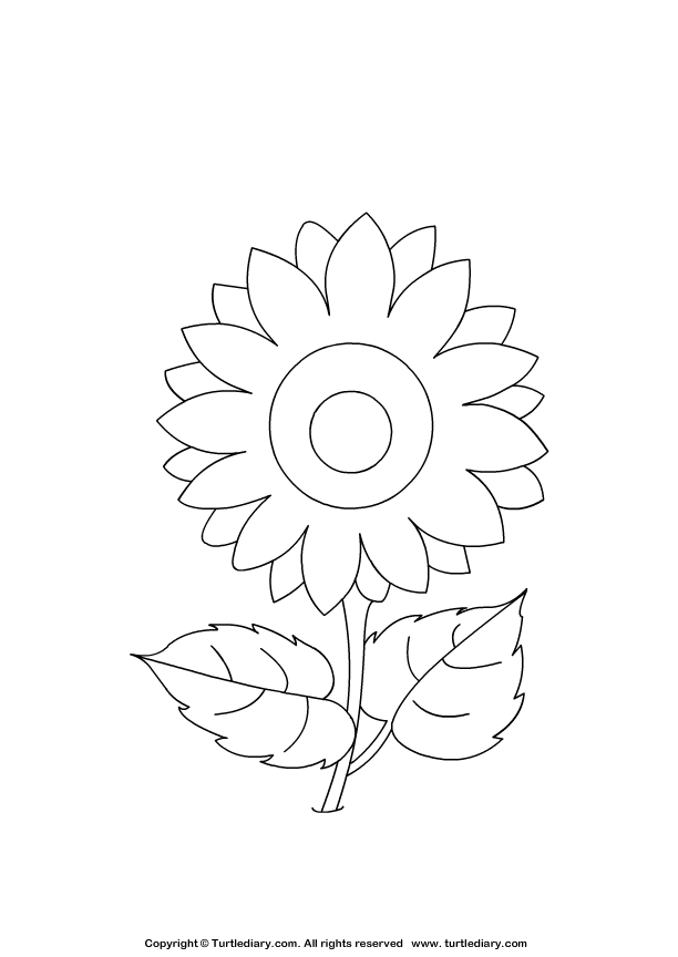 sunflower coloring page coloring sheet turtle diary