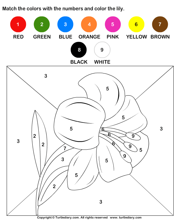 color by matching with numbers worksheet turtle diary