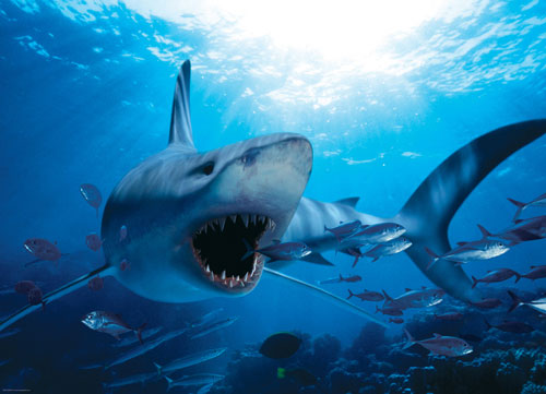 Hungry Shark Jigsaw Puzzle