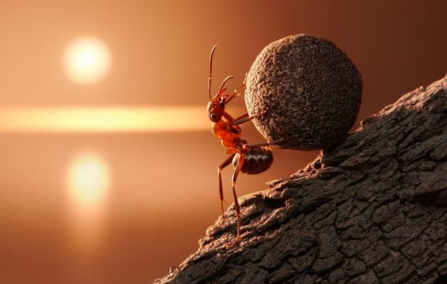 Bir karınca kadar çalışkan olun