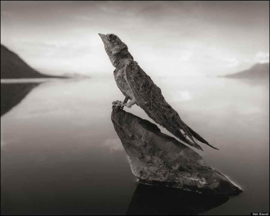 stone_animals_lake_05