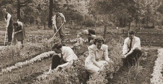 photo of students tending a victory garden in the 1940s