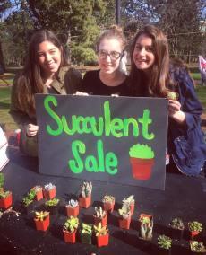 ProBo Succulent Sale