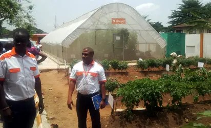 Greenhouse tech can fill tomatoes production gap in Nigeria