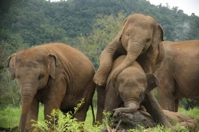 Only 300 elephants remain in Nigeria's wildlife – Conservation Foundation