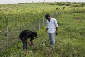 Group urges FG pay more attention to agriculturea
