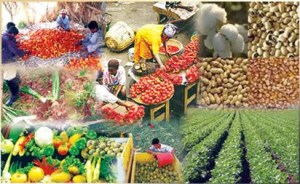 Don calls for private sector driven food sufficiency regime