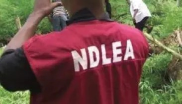 NDLEA urges collaboration to tackle substance abuse