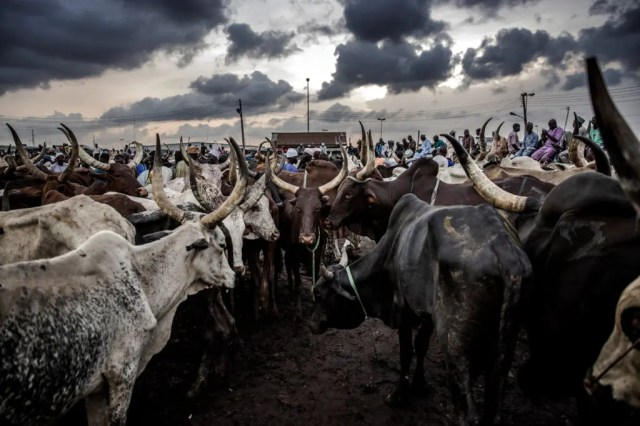 RUGA, Fura, intervention
