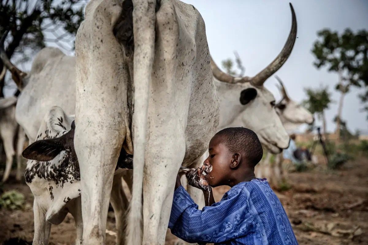 Stop accusing us of killings in the country - Fulani leader