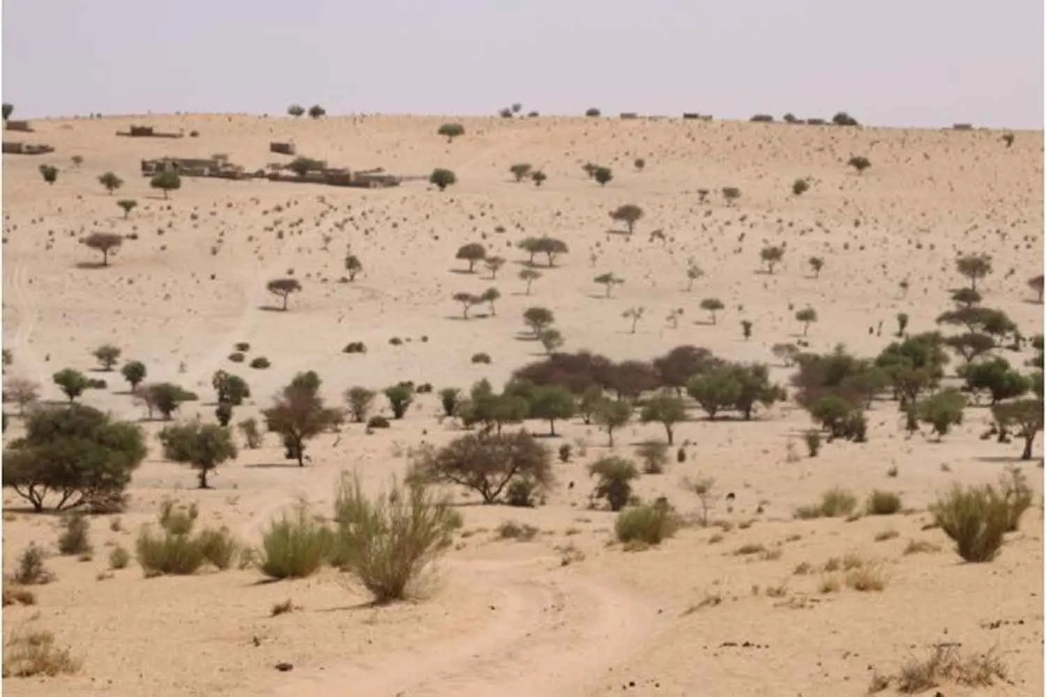 Desertification: NESREA urges Gombe communities to allocate land for tree planting - Vanguard