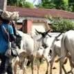 Igbo governors 've secretly donated land for RUGA — IPOB