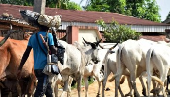 Registration of herders, farmers'll help fish out criminals, increase crop production