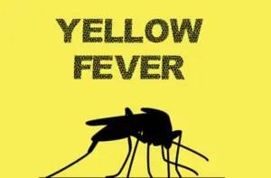 Katsina Govt to immunise 7m residents against Yellow Fever