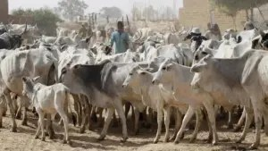 Katsina-Ala, Herders