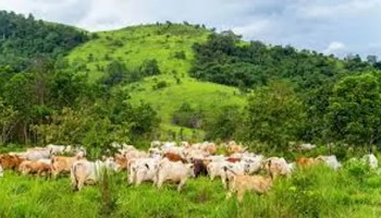 The sociology, law and praxis of grazing reserves in Nigeria