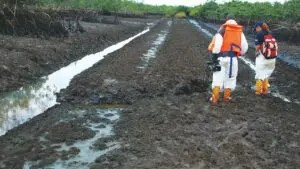 Ogoni Clean-up: We've cleaned up 17 contaminated sites ― FG