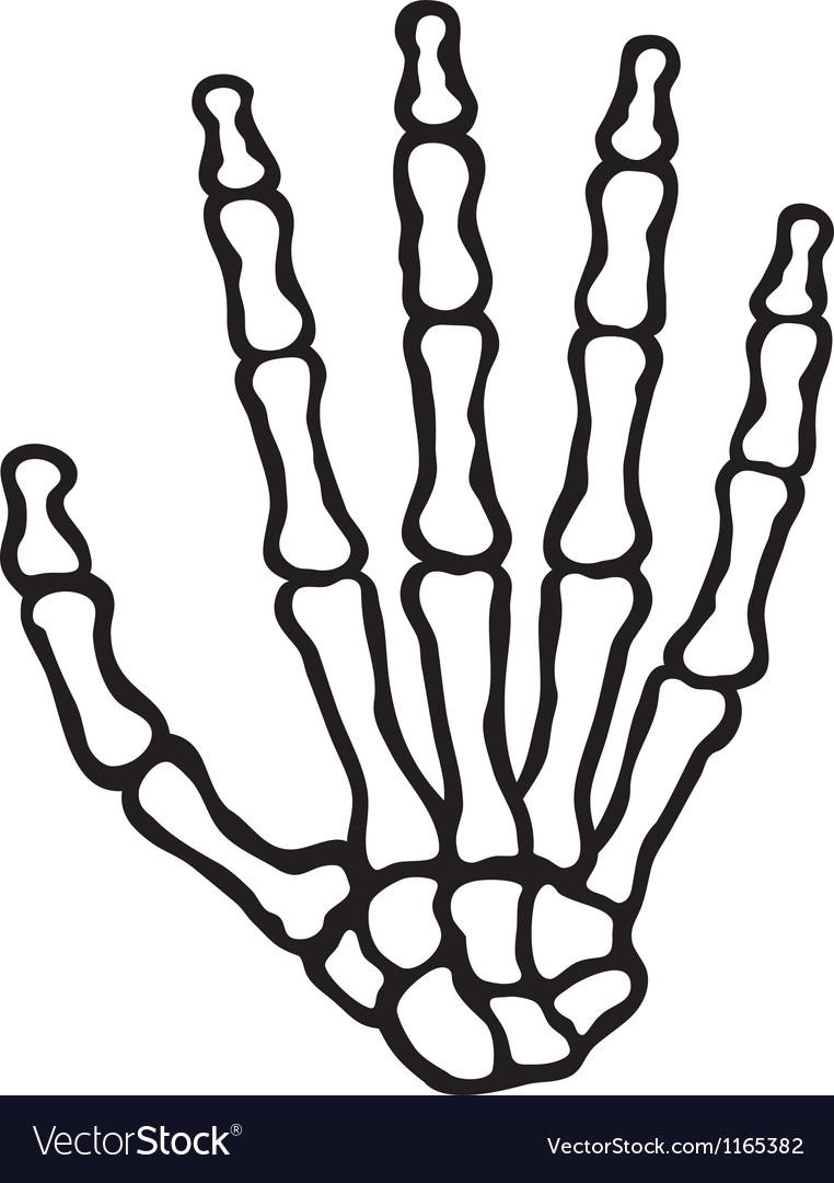 human skeleton hand vector by tribaliumvs image 1165382