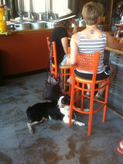 Denver Brewing Company patrons come in all sizes. (Jason Dick/CQ Roll Call)
