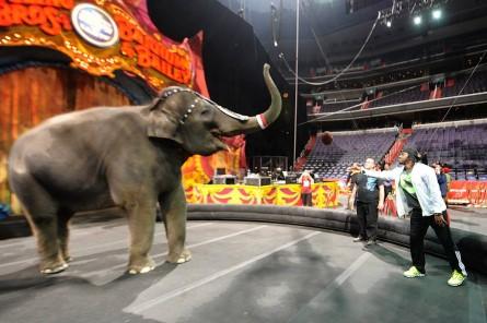 RGIII_elephants