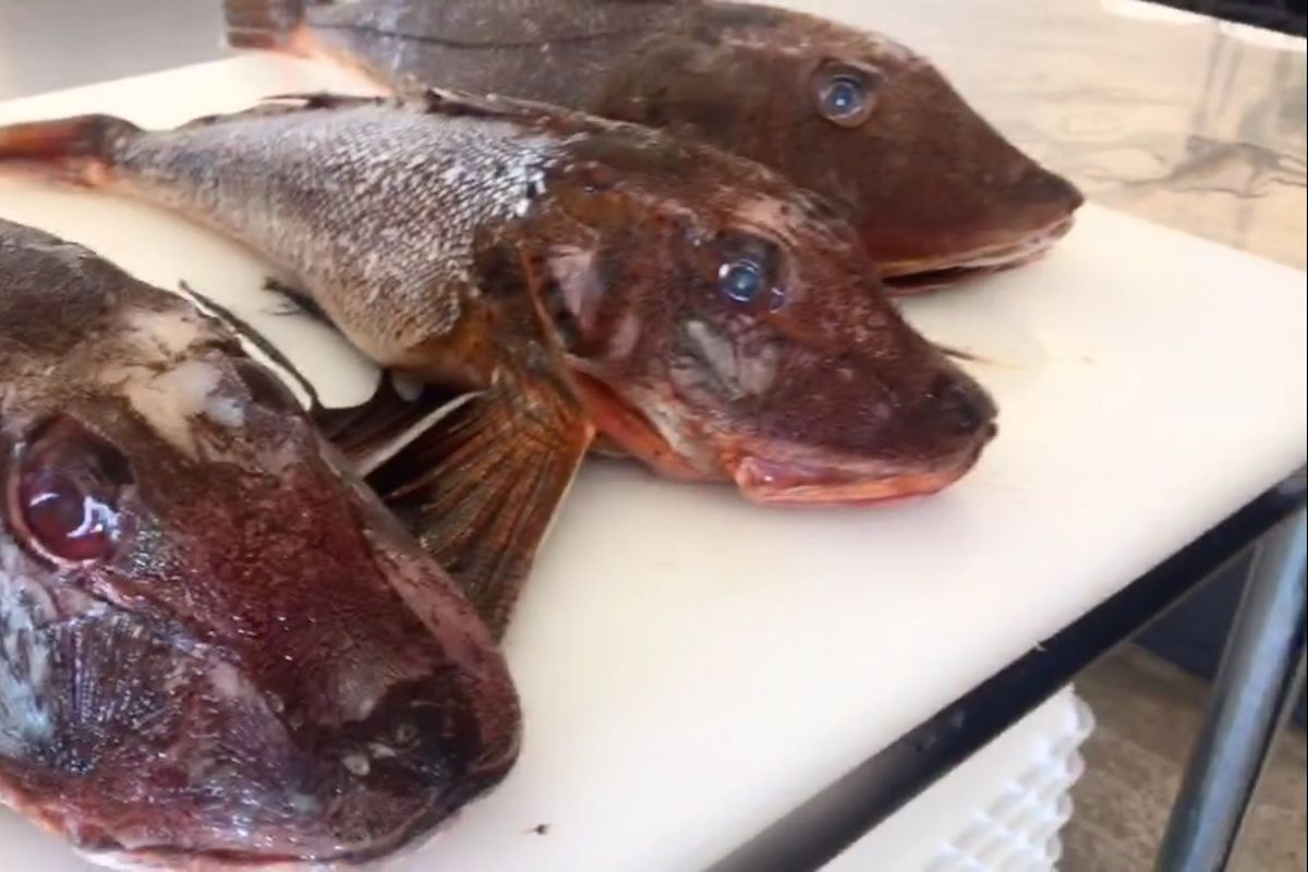 Fresh Fish San Francisco