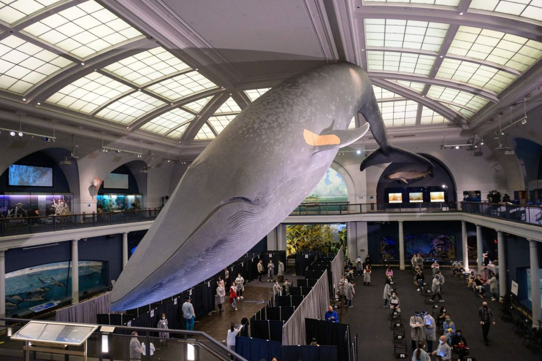 A statue of a blue whale with a band-aid on its fin hangs above a vaccination site.