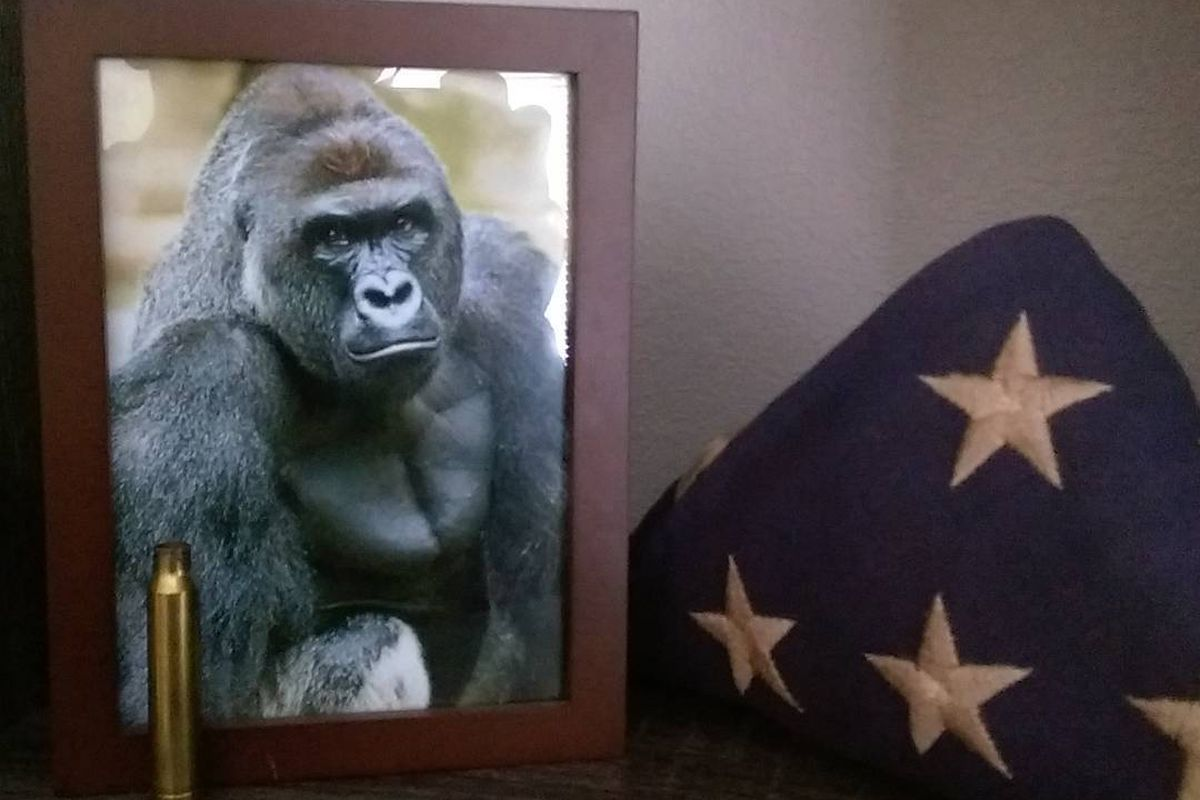 The Harambe Meme Is Still Going Strong And It S About A Lot More