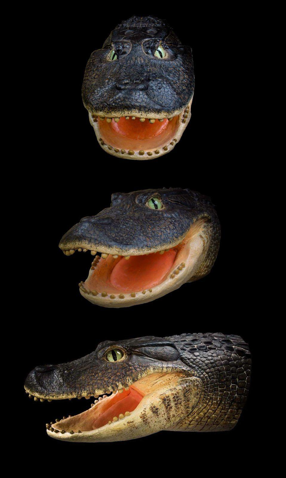 Meet An Adorable Ancient Crocodile That Had Dental