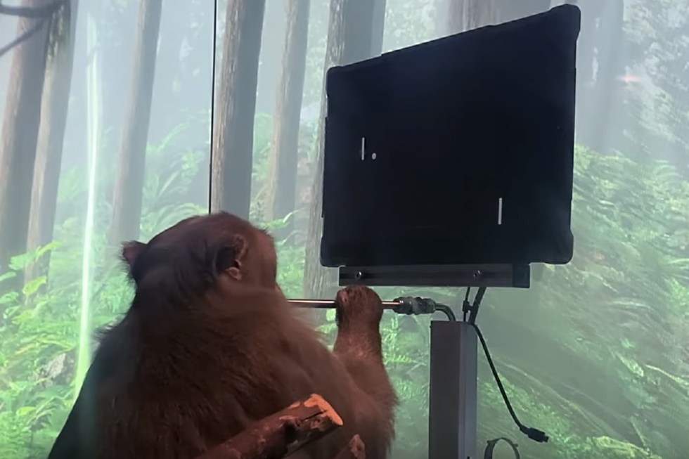 A monkey and his Pong