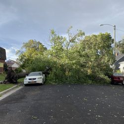 Strong winds have blew a tree over in Salt Lake City near the 1800 South block of 200 East early Tuesday, Sept. 8, 2020.