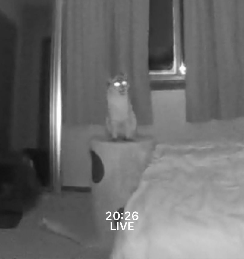 A night-vision image of a cat sitting on a piece of furniture with its eyes glowing and mouth open