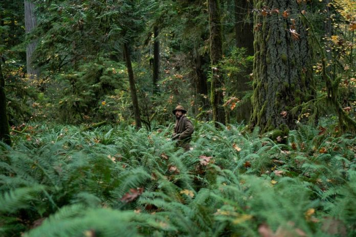 A man stands amidst ferns in a forest.