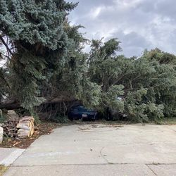 A vehicle is covered by a tree after strong winds blew trees over near 500 South and 1000 East in Bountiful, on Tuesday, Sept. 8, 2020.