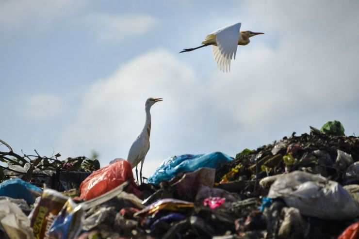 Egrets fly over plastic waste in a dump in Aceh, Indonesia.