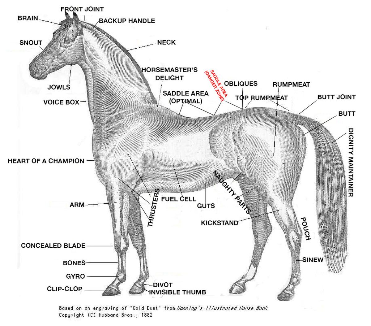 A Crash Course In Horse Anatomy For The Kentucky