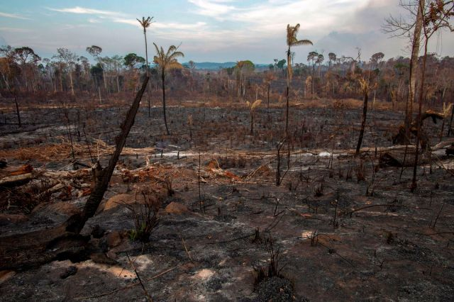 Image result for photos of burned Amazon Rainforest