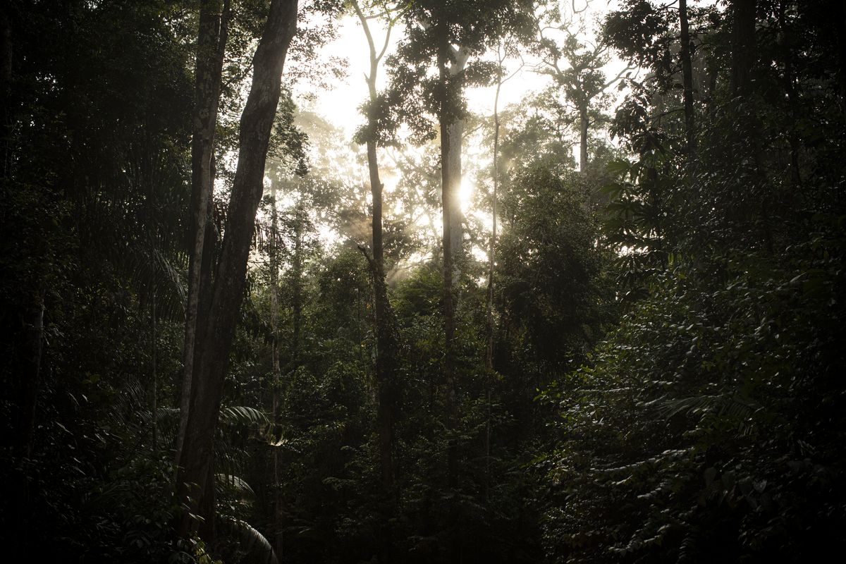 The sun sets behind trees in the Amazon rainforest.