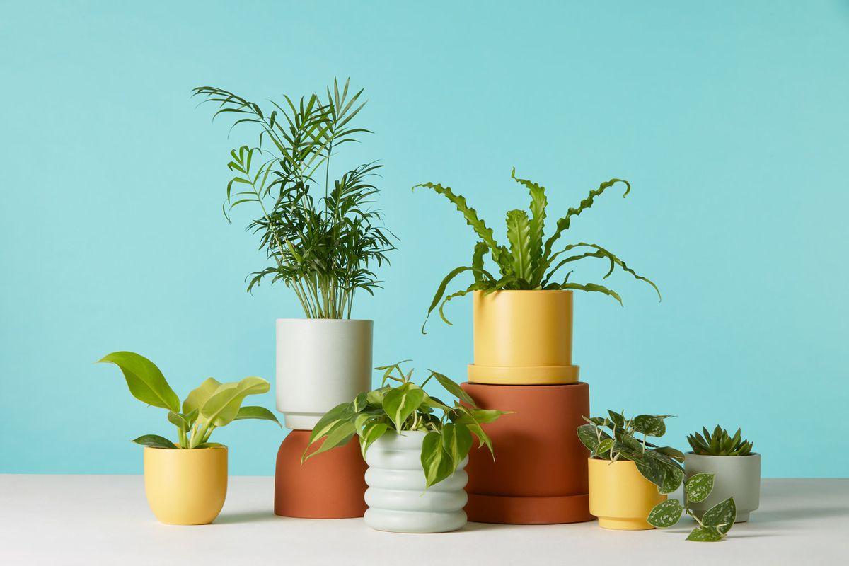 Best Indoor Plants You Can Buy Online Now Curbed