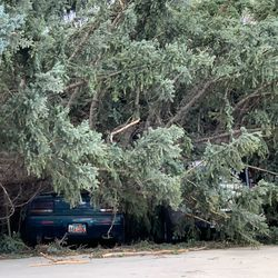 A vehicle is covered by a tree after strong winds blew trees over near 500 South and 1000 East in Bountiful on Tuesday, Sept. 8, 2020.